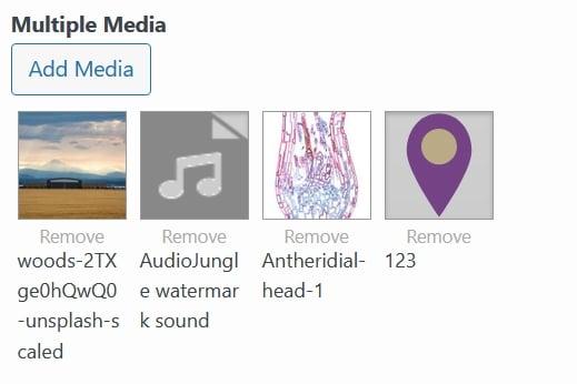 Widget Form Multi Media